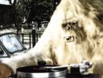 Reggae Articles: The Expanders - Hustling Culture