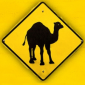 The Camel Riddim