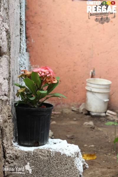 Inna De Yard © Samo Kush-I