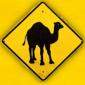 The Camel Riddim
